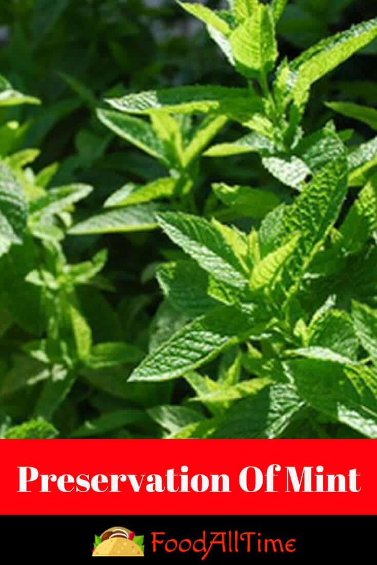 Preserving Mint Leaves: Storing, Drying & Freezing Mint